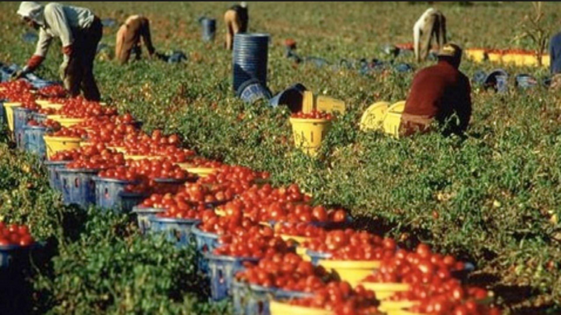 Agricoltura: il Senato approva il Disegno di Legge contro il caporalato