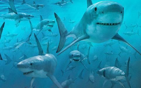 A trapani finti allarmi squali e vere siringhe in spiaggia for Squalo bianco da colorare