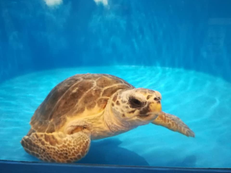 Matrimonio Spiaggia Favignana : Favignana per la giornata delle tartarughe è stata liberata demetra