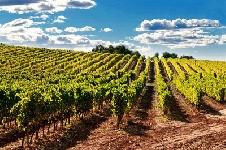 Sviluppo sostenibile della vitivinicoltura, nasce la Fondazione SOStain Sicilia