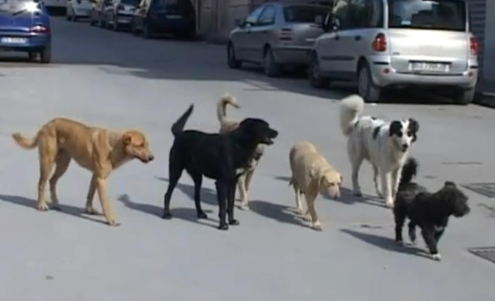 Risultati immagini per cani randagi