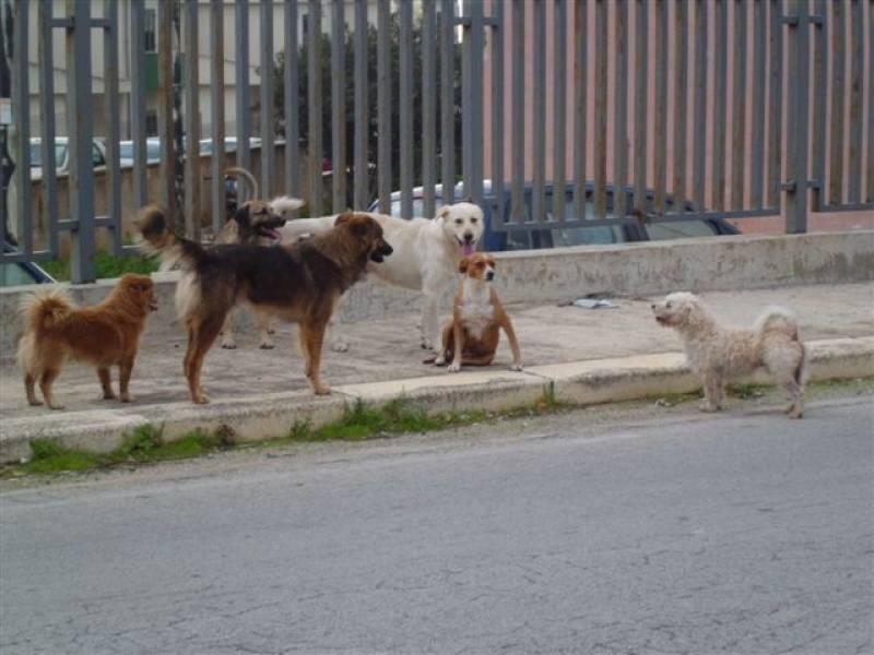 l 39 enpa di castelvetrano ha seguito i cani dalla sicilia al nord italia. Black Bedroom Furniture Sets. Home Design Ideas