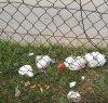 https://www.tp24.it/immagini_articoli/01-04-2020/1585736408-0-persone-marsala-escono-abbandonare-rifiuti-strada.jpg