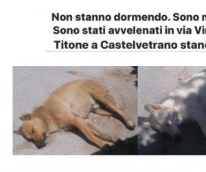 https://www.tp24.it/immagini_articoli/01-07-2020/1593612667-0-castelvetrano-cani-avvelenati-nella-notte.jpg