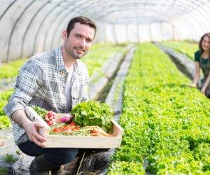https://www.tp24.it/immagini_articoli/01-10-2017/1506848029-0-agricoltura-giovani-tornano-terra-sicilia-testa-numero-imprese.jpg