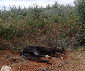 https://www.tp24.it/immagini_articoli/01-10-2018/1538421337-0-castelvetrano-cane-scoperto-cavallo-legato-stava-morendo-infatti.jpg