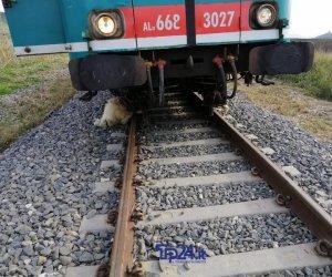 https://www.tp24.it/immagini_articoli/02-02-2020/1580669925-0-gregge-travolto-treno-alcamo-indaga-pericolo-disastro-ferroviario.jpg