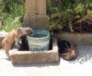 https://www.tp24.it/immagini_articoli/02-07-2018/1530544767-0-storia-cani-indifesi-stato-ucciso-tanti-richieste-vane.jpg