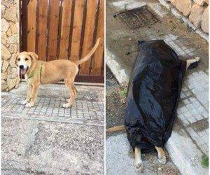 https://www.tp24.it/immagini_articoli/02-08-2018/1533164307-0-orrore-marsala-cucciolo-meticcio-prima-abbandonato-ucciso.jpg