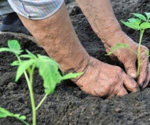 https://www.tp24.it/immagini_articoli/03-05-2016/1462228185-0-marsala-storie-di-agricoltura-biologica-e-di-inclusione-sociale.jpg