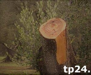 https://www.tp24.it/immagini_articoli/03-05-2018/1525333695-0-mafia-campobello-mazara3-danneggiamenti-tripoli-vittime-ignare.jpg