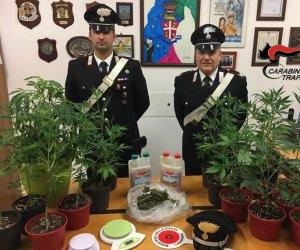 https://www.tp24.it/immagini_articoli/03-06-2020/1591177104-0-coltivava-marijuana-in-casa-arrestato-un-marsalese.jpg