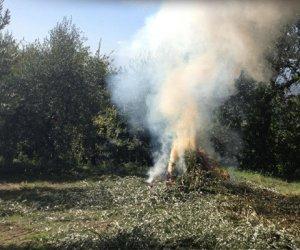 https://www.tp24.it/immagini_articoli/03-07-2014/1404392555-0-agricoltura-bruciare-le-ramaglie-non-e-piu-reato.jpg