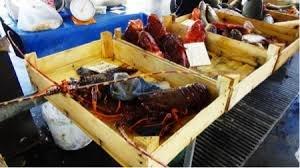 https://www.tp24.it/immagini_articoli/03-08-2018/1533279779-0-trapani-mercato-pesce-abusivi-sequestri-multe-20000-euro.jpg