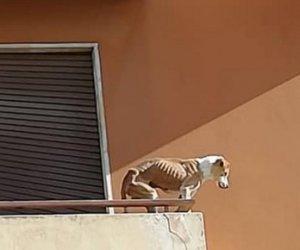 https://www.tp24.it/immagini_articoli/04-01-2020/1578157097-0-trapani-cane-denutrito-sporge-balcone-quando-arrivano-soccorsi-scoperta.jpg