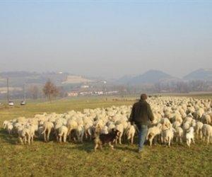https://www.tp24.it/immagini_articoli/04-02-2018/1517777129-0-regione-concede-otto-terreni-demaniali-pascolo-trapanese.jpg