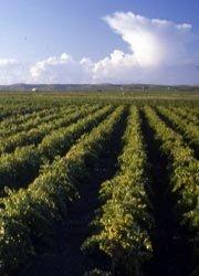 https://www.tp24.it/immagini_articoli/04-04-2015/1428177866-0-furti-nelle-campagne-di-marsala-e-petrosino-maggio-chi-tutela-gli-agricoltori.jpg