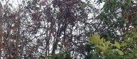 https://www.tp24.it/immagini_articoli/04-04-2020/1585988077-0-laurea-carola-tempo-coronavirus-dedica-mamma.jpg