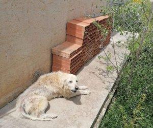 https://www.tp24.it/immagini_articoli/04-05-2021/1620148978-0-trapani-maltrattava-il-proprio-cane-denunciato-dipendente-pubblico.jpg