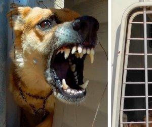 https://www.tp24.it/immagini_articoli/04-07-2021/1625427942-0-campobello-di-mazara-pastore-tedesco-aggressivo-catturato-dal-comune.jpg