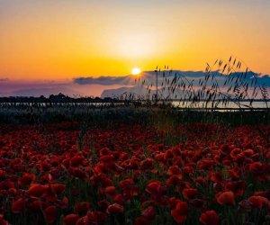 https://www.tp24.it/immagini_articoli/04-08-2018/1533396747-0-marsala-conclusa-edizione-festival-tramonto.jpg