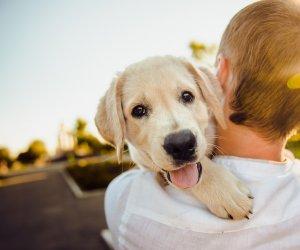 https://www.tp24.it/immagini_articoli/04-09-2019/1567600007-0-quattro-zampe-tanta-salute-malattie-diffuse-cani.jpg