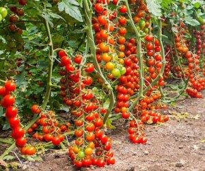 https://www.tp24.it/immagini_articoli/04-09-2019/1567612123-0-agricoltura-sicilia-arrivano-fondi-milioni-euro-comparto.jpg