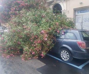 https://www.tp24.it/immagini_articoli/04-09-2021/1630744201-0-primi-temporali-in-sicilia-danni-e-allagamenti-a-trapani.jpg
