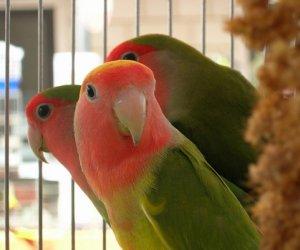 https://www.tp24.it/immagini_articoli/04-10-2019/1570189193-0-centro-aias-mostra-ornitologica-citta-marsala.jpg
