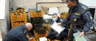 https://www.tp24.it/immagini_articoli/04-12-2020/1607082552-0-sicilia-trasportano-nbsp-10-chili-di-cocaina-tra-i-mandarini-due-corrieri-in-manette.png