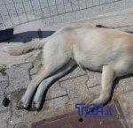 https://www.tp24.it/immagini_articoli/05-01-2019/1546677596-0-cani-avvelanti-campobello-mazara.jpg