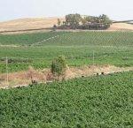 https://www.tp24.it/immagini_articoli/05-02-2018/1517835026-0-marsala-vino-soluzione-valorizzare-lattivita-viticoltori.png