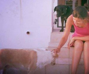 https://www.tp24.it/immagini_articoli/05-02-2019/1549376118-0-selinunte-veleno-uccidere-cani-morti-altri-spariti.png