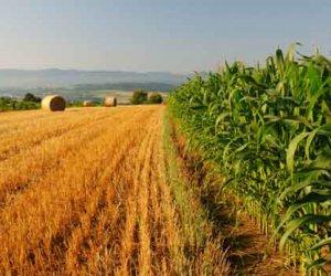 https://www.tp24.it/immagini_articoli/05-04-2016/1459876974-0-sicilia-i-nuovi-bandi-del-psr-sicilia-2014-2020-per-i-finanziamenti-allagricoltura.jpg