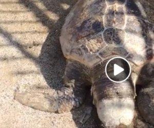 https://www.tp24.it/immagini_articoli/05-05-2019/1557083633-0-alcamo-tartaruga-marina-trovata-morta-abbandonata-sullasfalto-video.jpg