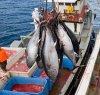 https://www.tp24.it/immagini_articoli/05-06-2019/1559737126-0-sicilia-cisl-taglio-quote-tonno-favorisce-flotte-straniere-persi-posti-lavoro.jpg