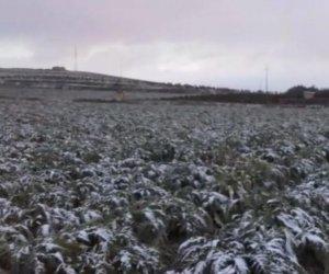https://www.tp24.it/immagini_articoli/06-01-2019/1546810237-0-neve-gelo-sicilia-contano-danni.jpg