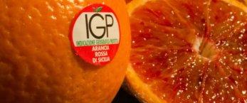 https://www.tp24.it/immagini_articoli/06-05-2019/1557152398-0-fanta-arance-rosse-sicilia.jpg