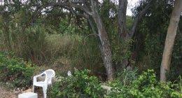 https://www.tp24.it/immagini_articoli/06-05-2021/1620302971-0-quella-povera-donna-che-si-prostituisce-vicino-il-canile-comunale-di-marsala-nbsp.jpg