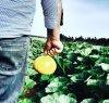 https://www.tp24.it/immagini_articoli/06-07-2017/1499355620-0-tirocini-frutti-sole-assume-addetto-vendite.jpg