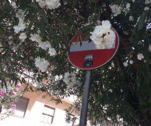 https://www.tp24.it/immagini_articoli/06-07-2018/1530832389-0-marsala-anche-strisce-sono-parcheggiatori-abusivi.jpg