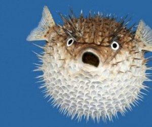 https://www.tp24.it/immagini_articoli/06-07-2019/1562441705-0-salvinik-lesplosione-pesce-palla.jpg