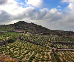 https://www.tp24.it/immagini_articoli/06-09-2019/1567752161-0-aperto-pantelleria-festival-vendemmia-qualita-questanno.jpg