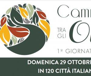 https://www.tp24.it/immagini_articoli/06-10-2017/1507308789-0-anche-campobello-camminata-olivi-scoperta-cultura-dellolio.jpg