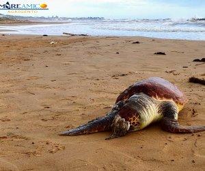 https://www.tp24.it/immagini_articoli/06-11-2019/1573060803-0-sicilia-tartaruga-caretta-caretta-trovata-morta-spiaggia-maddalusa.jpg