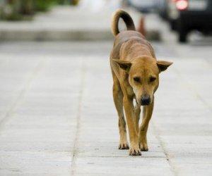 https://www.tp24.it/immagini_articoli/07-01-2015/1420633129-0-difendi-il-cane-quelli-non-acchiappati-una-campagna-a-mazara.jpg