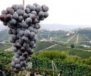 https://www.tp24.it/immagini_articoli/07-04-2016/1460015287-0-al-vinitaly-la-guida-per-le-strade-del-vino-di-sicilia.jpg