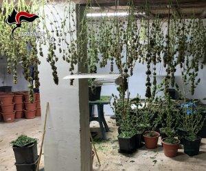 https://www.tp24.it/immagini_articoli/07-04-2021/1617778385-0-armi-e-droga-a-palermo-7-arresti-perquisizioni-anche-a-marsala.jpg