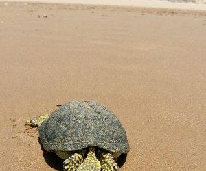 https://www.tp24.it/immagini_articoli/07-07-2018/1530941826-0-caso-tartaruga-dacqua-dolce-trovata-riva-mare-fontane.jpg