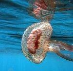 https://www.tp24.it/immagini_articoli/07-08-2018/1533625591-0-invasione-meduse-fontane-sindaco-dispone-analisi-acque.jpg